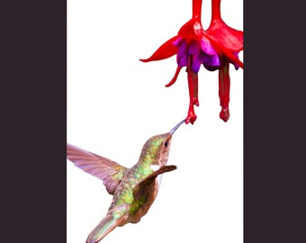 Humming Bird Cards