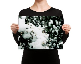 Flowers Hibernating for the Winter- Canvas Wall Art