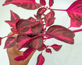 House Plants Etsy