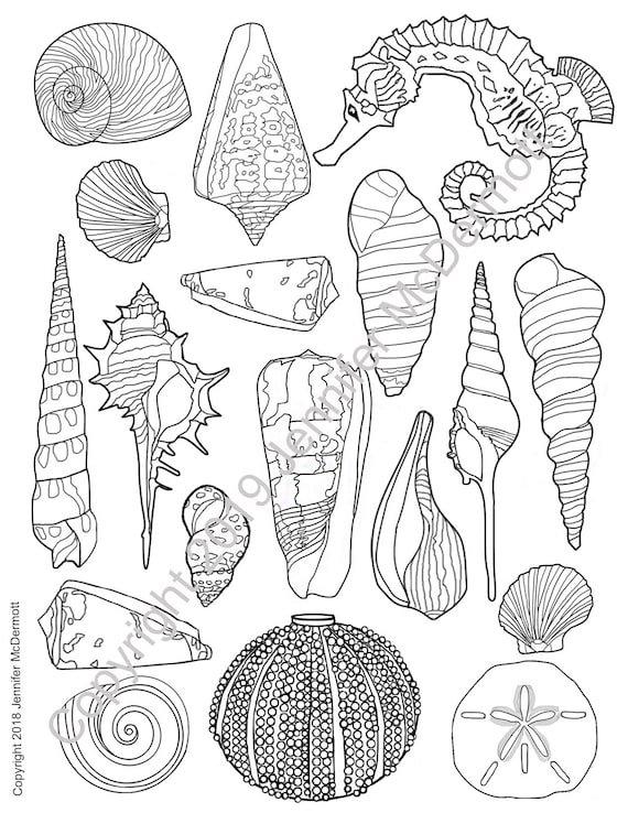 Seashell coloring page  Sharps and rounds: some shells have