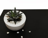 Marble hemisphere concrete planter, Succulents cactus pot,  Round small air plant holder for gifts, Stone rose container