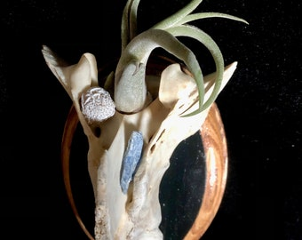 Bone and crystal hanging air plant holder