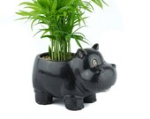 Hippo planter with mini palm tree, succulent, lucky bamboo, air plant, animal planter vase, unique birthday, house warming, holiday gift