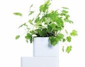 UNO_White: The best self-watering terracotta pot for indoor growing of healing herbs