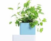 UNO_Light Blue: The best self-watering terracotta pot for indoor growing of healing herbs