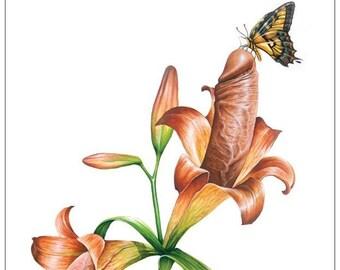Penis Botanicus - note card