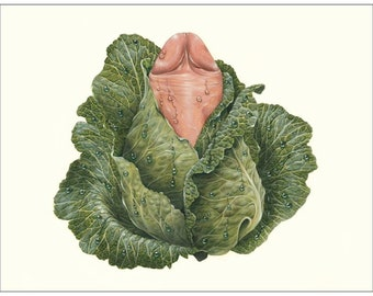 Cabbage Dick - note card