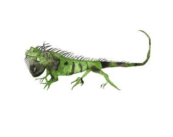 Green Iguana Watercolor Print