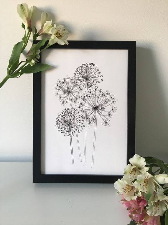 Allium Flower Art Print / Illustrated Botanical Wall Art / Illustration  Poster / Flowers & Plants Drawing / A4, A5 or 5 x 7
