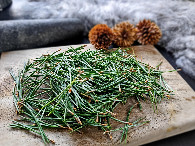 Thé à laiguille de pin sylvestre séché Pinus sylvestris Pin   Etsy