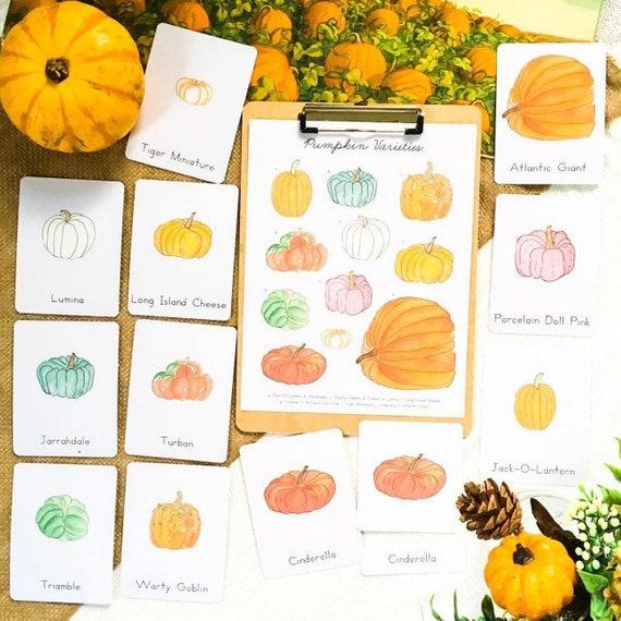 Pumpkin Varieties Montessori 3 Part Cards Homeschool