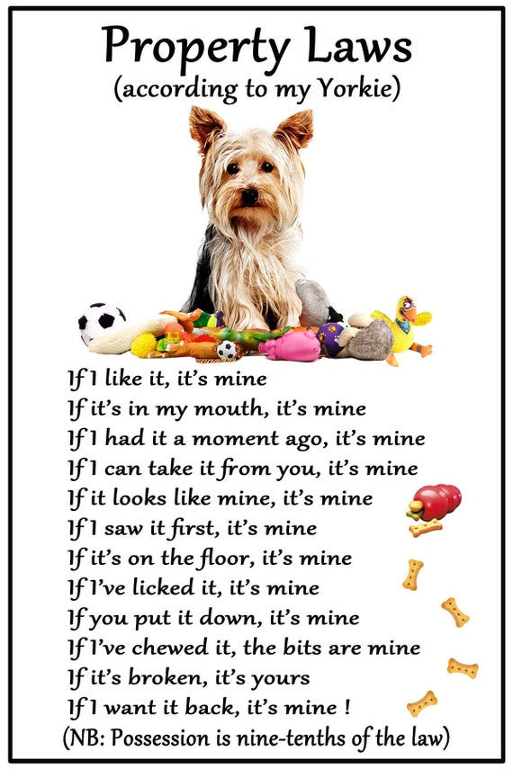Funny Dog Yorkshire Terrier House Rules Refrigerator Magnet Gift Card Idea