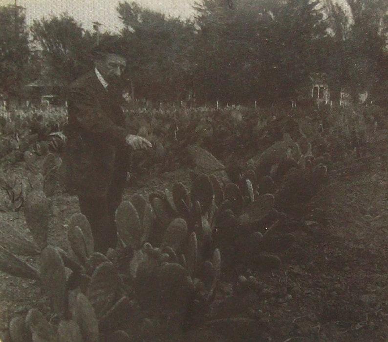Old Antique Vtg Ca 1900s Burbank the Plant Wizard Santa Rosa Cal Glass Slide