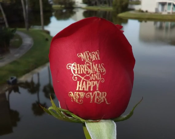 Red Rose- Happy New Year