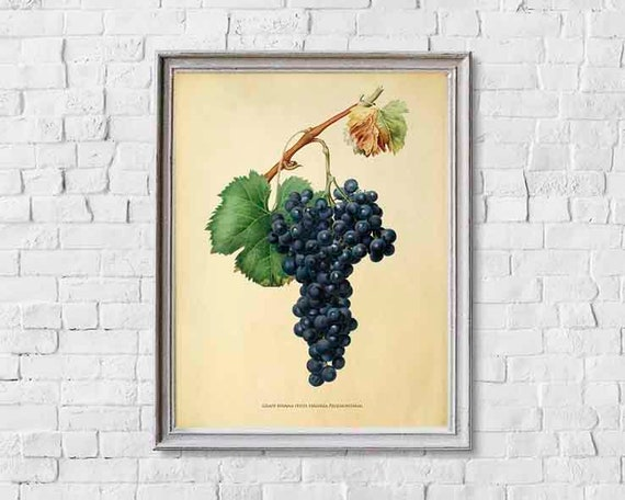 Grape Art Print Red Wine Wall Kitchen Fruit Etsy