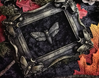 Frame/ sphinx moth / Gothic frame Sphinx moth / goth frame / goth home deco / witch home deco / dark home deco / moth / victorian /edwardian