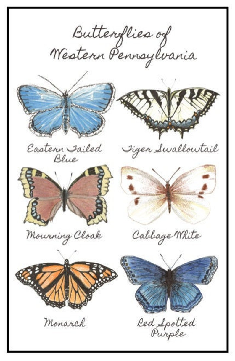 Butterflies of Western Pennsylvania Poster Butterfly Poster image 0