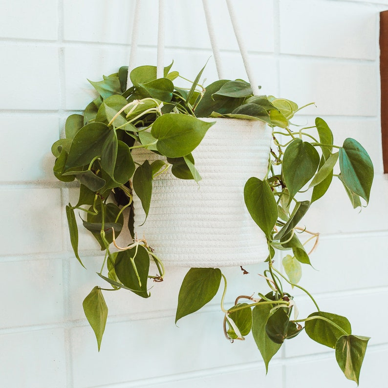 OrganiHaus Set of 2 Hanging Rope Planter Baskets 8x8 with Long Hanging Rope Natural Cotton Hand Woven Plant Holder Off-white