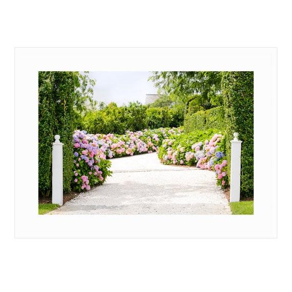 Climbing Roses and Hydrangeas Framed Nantucket Art Print