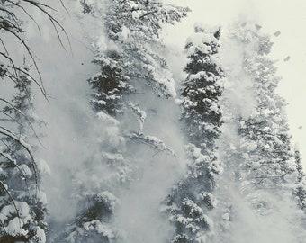Settling Pines. Fine Art Photograph
