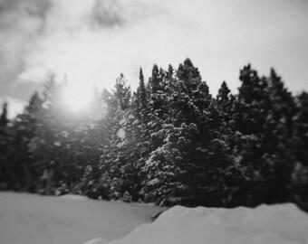 Winter Daydream. Fine Art Photograph