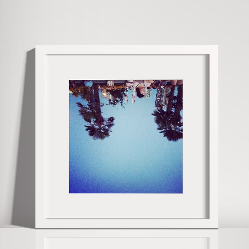 Vancouver Inverted  Palm Trees   Nature Photography  image 0