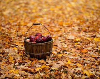 Apple Season - Fall in New York - Autumn Leaves - Basket of Apples - Nature Photography - Photographic Print