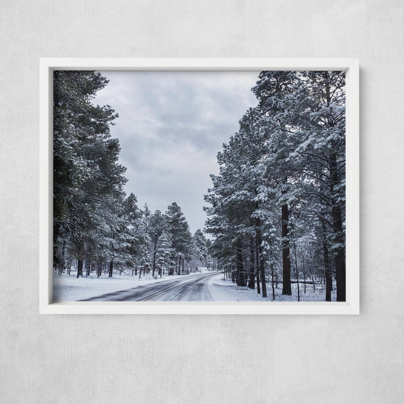 Snowy Pine  Pine Trees in the Grand Canyon  Winter in Grand image 0