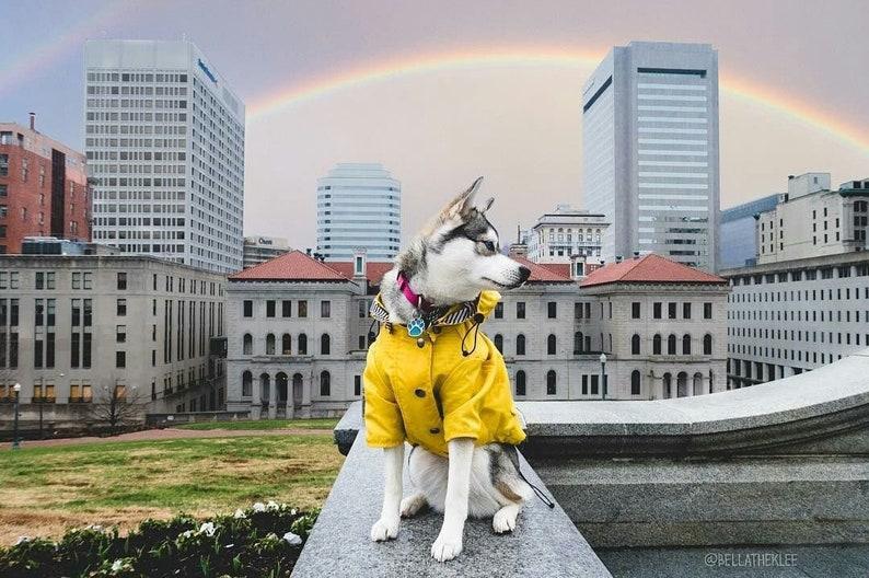 Yellow Dog Raincoat // Waterproof Dog Jacket for All Breeds // image 0