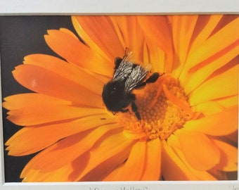 Bee on a yellow flower - fine art giclee mounted print