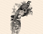 Reeves' Pheasant Victorian Vector Clipart | Antique Vintage Long-tailed Bird Phasianus Reevesii | Instant Download Clipart | SVG PNG JPG