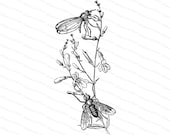 Victorian Flies and Wild Flowers Vector Clip Art | Antique Vintage Floral, Insects | Helomyza Fly Instant Download  SVG PNG JPG