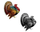 Thanksgiving Turkey Clipart, Color & Black and White | Antique Vintage Bird Vector Clip Art SVG PNG JPG Printable Download Old Fashioned