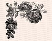 Victorian Roses Vector Clip Art | Vintage Floral, Flower | Instant Download SVG PNG JPG