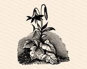 Victorian Lily Flower | Antique Vintage 1880s Lilies | Vintage Floral Vector Clip Art Instant Download PNG JPG SVG