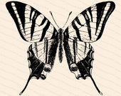 Victorian Scarce Swallow-tailed Butterfly (Papilio podalirius) Vector Clip Art | Vintage Insect | Instant Download SVG PNG JPG