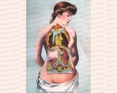 Vintage Edwardian Anatomical Color Clipart | Antique Internal Organs of the Chest and Pelvis Instant Download PNG JPG