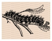 Edwardian Caterpillar | Antique Vintage Insect Vector Clip Art SVG PNG JPG Instant Digital Download