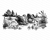 Victorian Swans in Lake with Water Lilies and Cattails | Antique Vintage Swan Pond Vector Clip Art SVG PNG JPG Instant Digital Download