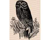 Edwardian Owl | Antique Vintage Bird Vector Clip Art SVG PNG JPG Instant Digital Download