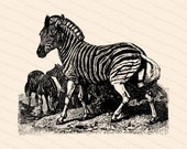 Victorian Zebra Vector Clipart | Antique Vintage Zebras | Instant Download Clipart | SVG PNG JPG