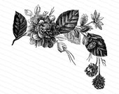 Victorian Spray of Flowers Vector Clip Art | Antique Vintage Floral, Flower | Instant Digital Download SVG PNG JPG