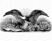 Vintage Patriotic Bald Eagle | Antique Victorian Eagle with Shield, Olive Branch, Constitution, Arrows, other symbols | SVG PNG JPG