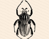 Victorian Goliathus cacius Beetle | Antique Vintage Insect Vector Clip Art SVG PNG JPG Instant Digital Download