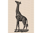Victorian Giraffe | Antique Vintage African Animals Vector Clip Art SVG PNG JPG Instant Digital Download