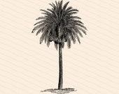 Victorian Palm Tree | Antique Vintage 1880s Arecaceae | Vintage Tropical Vector Clip Art Instant Download PNG JPG SVG