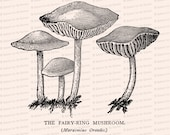 Vintage 1908 Fairy Ring Mushrooms Vector Clip Art | Antique Edwardian Marasmius oreades mushroom | Fungi Botanical Clipart | PNG JPG SVG