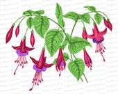 Victorian Fuschia Flowers Vector Clip Art | Antique Fuchsia magellanica | Vintage Floral Botanical Color | PNG JPG SVG