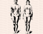 Vintage Edwardian Anatomical Clipart | Antique Comparison of Size and Form of Male and Female Bodies SVG PNG JPG
