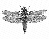 Victorian Dragonfly  | Antique Vintage Insect Vector Clip Art SVG PNG JPG Instant Digital Download